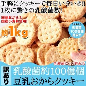 ※量目注意 1kg ※ 【限定店舗様のみ取扱可】手軽にクッキーで毎日いきいき!!乳酸菌約100億個【訳あり】豆乳おからクッキー1kg